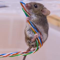 house mouse on wires