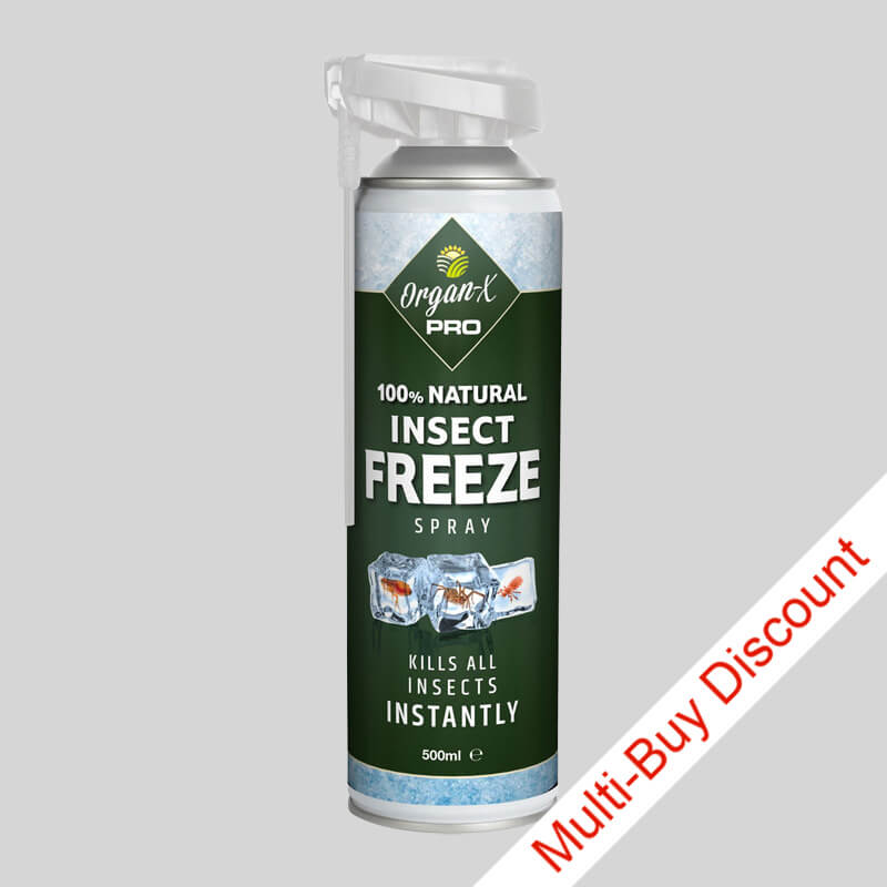 chemical free insect killer spray