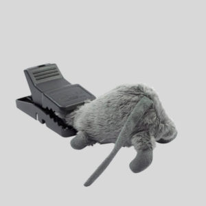 Trapper Mini Rex Mouse trap with caught mouse