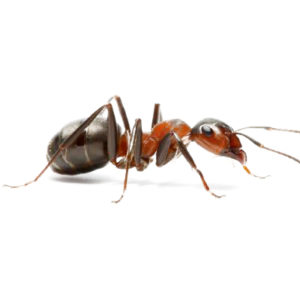 Ant Killer Products