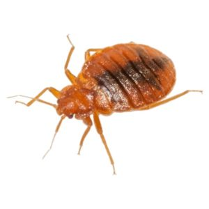 Bed Bug Killer Products