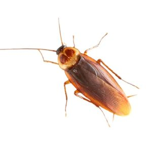 Cockroach Killer Products
