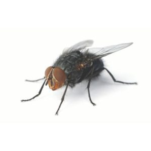 Fly Killer Products